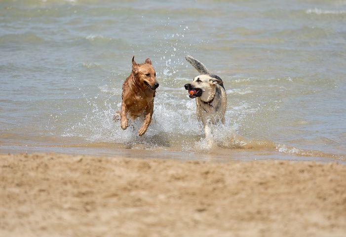 Rügen Mit Hund Erfahrungen